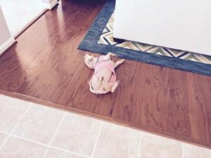 bella on the floor- monmoth model